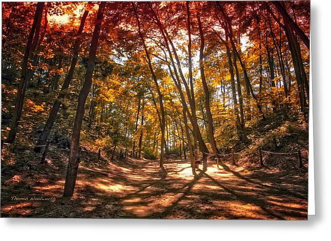 Autumn In The Dunes Greeting Card