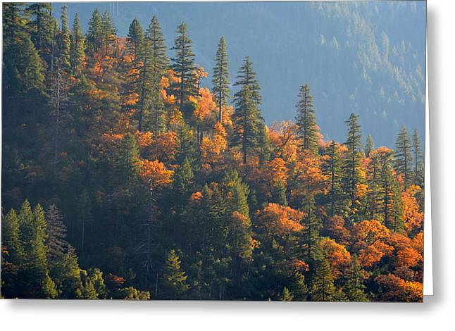 Autumn In The Feather River Canyon Greeting Card