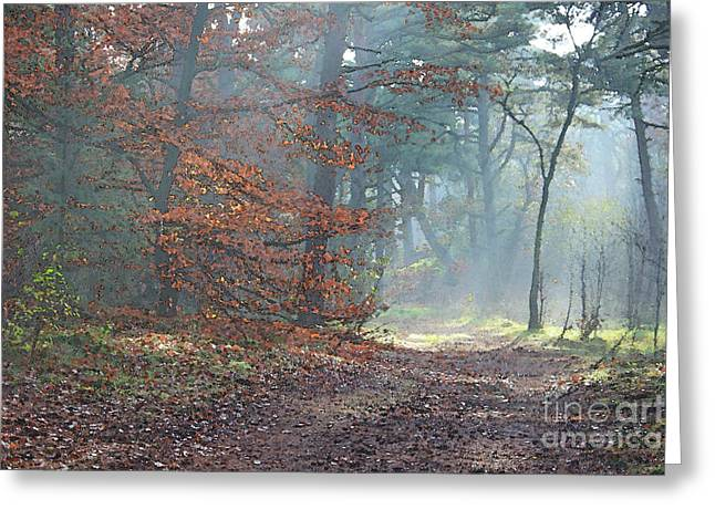 Autumn In The Forest, Painting Like Photograph Greeting Card
