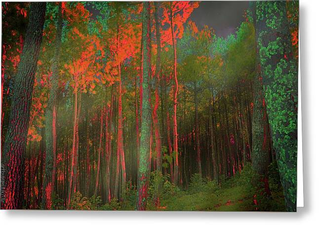 Greeting Card featuring the photograph Autumn In The Magic Forest by Mimulux patricia no No