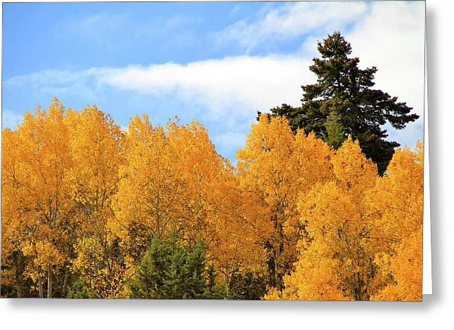 Autumn In The Owyhee Mountains Greeting Card