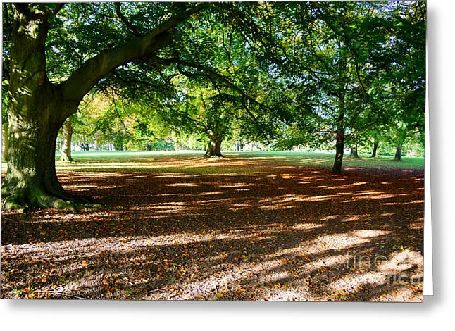 Autumn In The Park Greeting Card by Colin Rayner