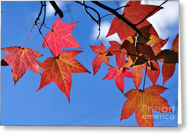 Autumn In The Sky Greeting Card by Kaye Menner