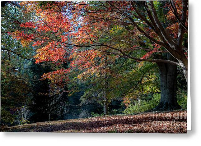 Autumn In The South Greeting Card by Dale Powell