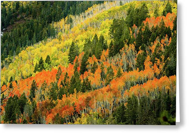 Autumn In The Uintas Greeting Card by TL Mair