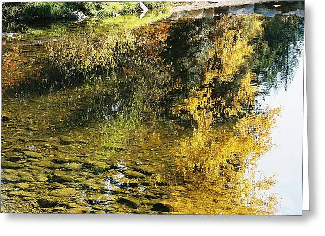 Autumn In The Water Greeting Card