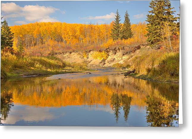 Autumn In Whitemud Ravine Greeting Card by Jim Sauchyn