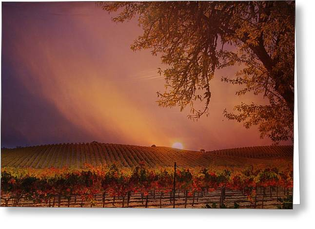 Autumn In Wine Country Greeting Card