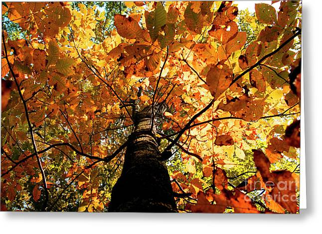 Autumn Is Glorious Greeting Card