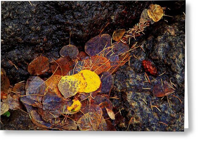Autumn Jewels.. Greeting Card