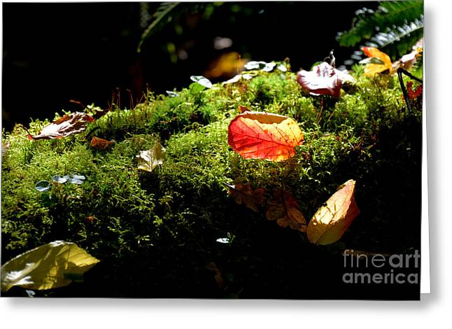 Autumn Jewels For A Mossy Log Greeting Card