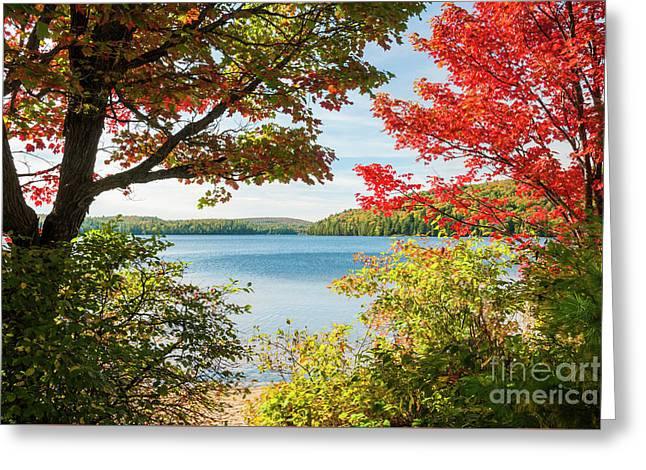Greeting Card featuring the photograph Autumn Lake by Elena Elisseeva