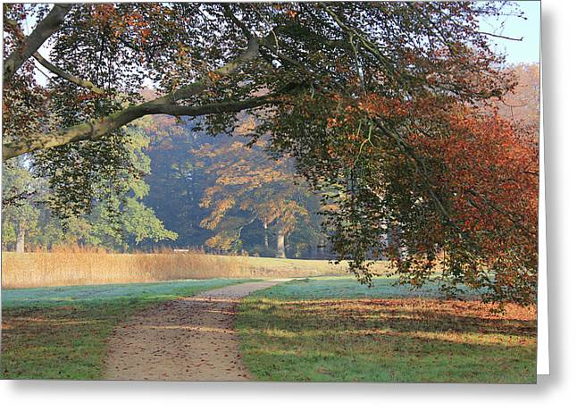 Autumn Landscape With Colored Trees In Park, Netherlands Greeting Card