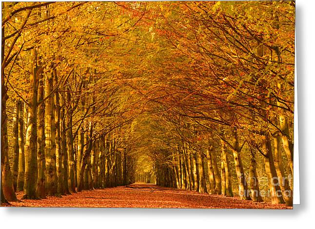 Autumn Lane In An Orange Forest Greeting Card
