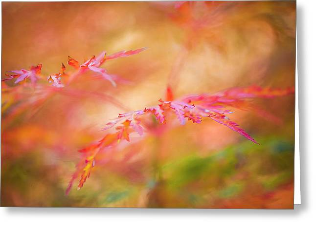 Autumn Leaf Abstract Greeting Card
