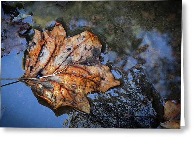 Greeting Card featuring the photograph Autumn Leaf by Debra and Dave Vanderlaan