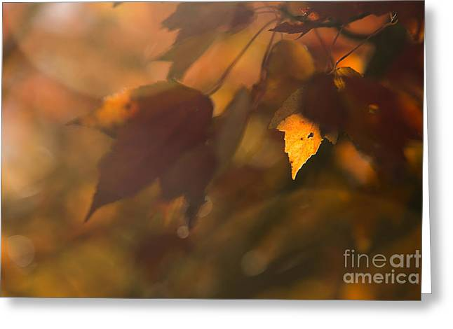 Autumn Leaf In Sunshine Greeting Card