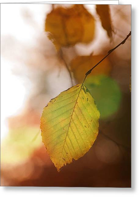 Autumn Leaf Greeting Card