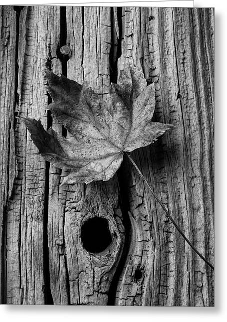 Autumn Leaf On Old Boards Greeting Card by Garry Gay
