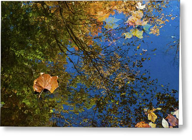 Greeting Card featuring the photograph Autumn Leaf Reflections by Lon Dittrick