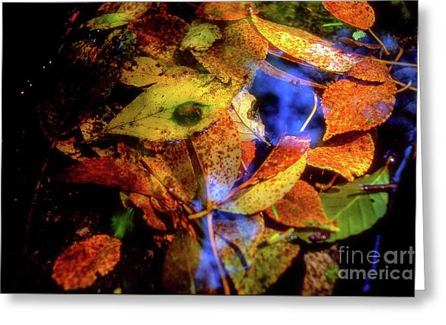 Autumn Leaf Greeting Card by Tatsuya Atarashi