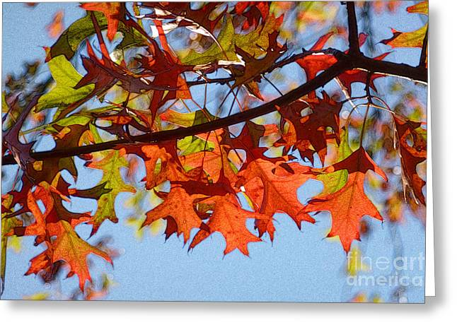 Autumn Leaves 16 Greeting Card by Jean Bernard Roussilhe