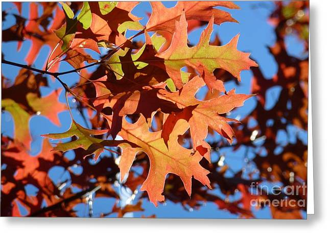 Autumn Leaves 17 Greeting Card by Jean Bernard Roussilhe