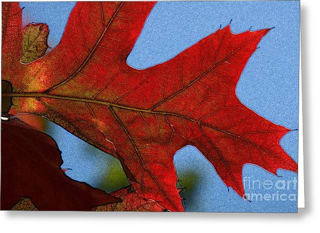 Autumn Leaves 18 Greeting Card by Jean Bernard Roussilhe