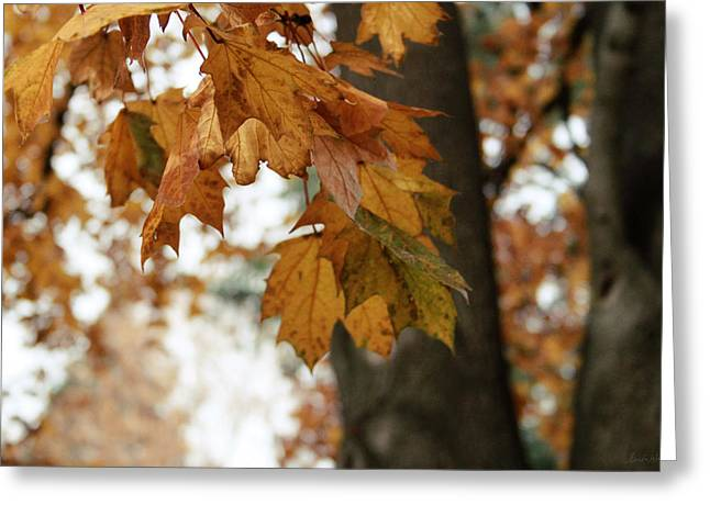 Autumn Leaves 2- By Linda Woods Greeting Card