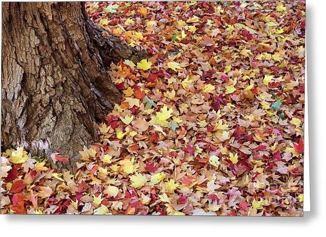 Autumn Leaves 2 Greeting Card