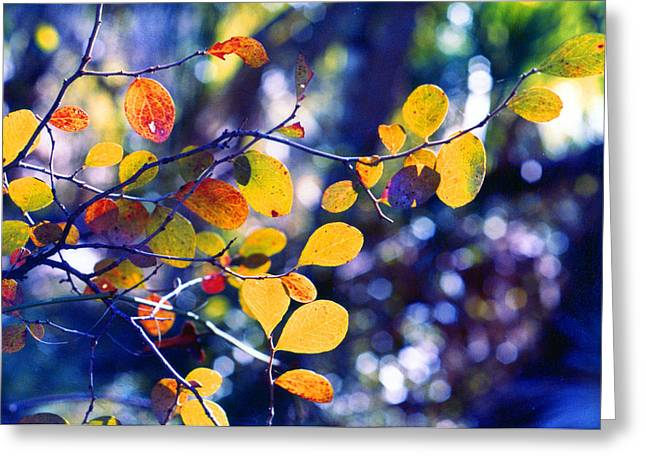 Autumn Leaves 2 Greeting Card by Russ Mullen