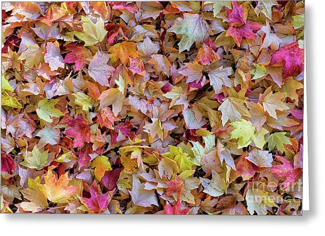 Autumn Leaves 4 Greeting Card
