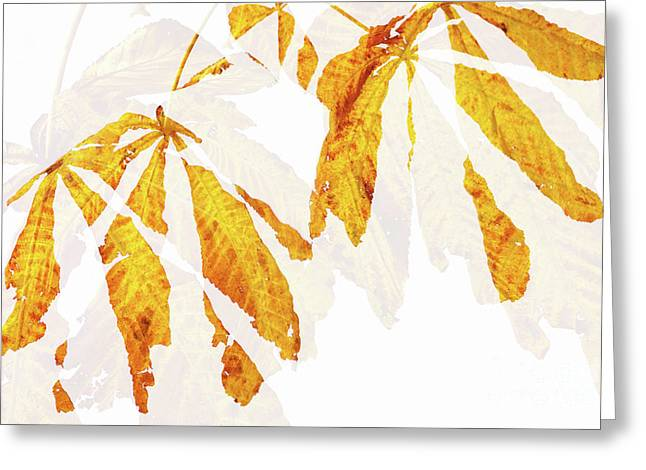 Autumn Leaves Abstract 2 Greeting Card