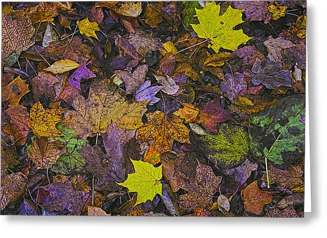 Autumn Leaves At Side Of Road Greeting Card by John Hansen