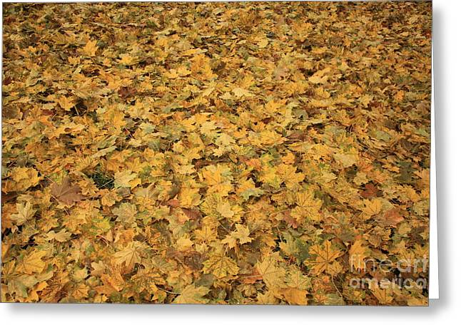 Autumn Leaves Canvas Greeting Card by Carol Groenen