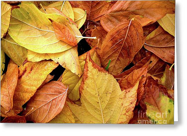Autumn Leaves Greeting Card by Carlos Caetano