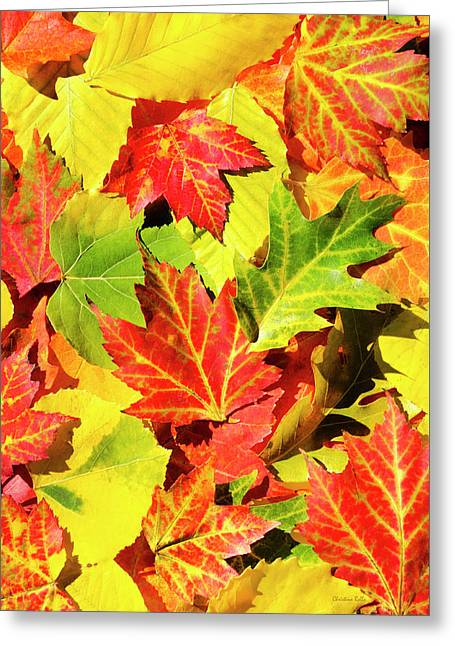 Greeting Card featuring the photograph Autumn Leaves by Christina Rollo