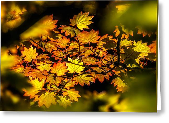 Greeting Card featuring the photograph Autumn Leaves by Claudia Abbott