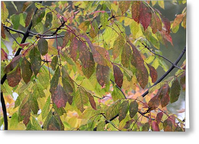 Greeting Card featuring the photograph Autumn Leaves by Doris Potter