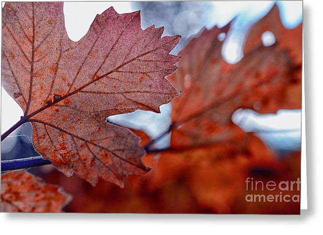 Autumn Leaves In A Forest Greeting Card by Sabine Jacobs