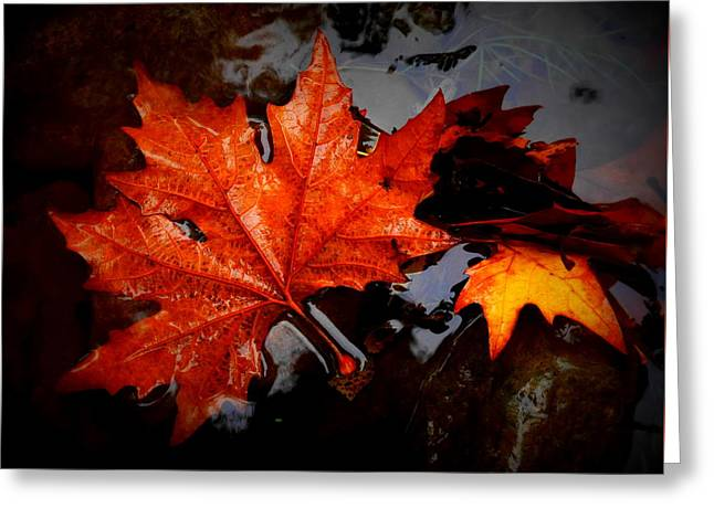 Autumn Leaves In Tumut Greeting Card by Lexa Harpell