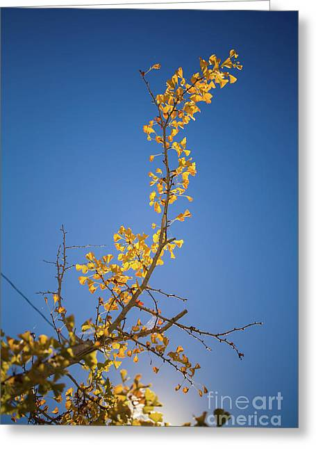 Greeting Card featuring the photograph Autumn Leaves Is Changing Color During October Fall Season With  by Jingjits Photography