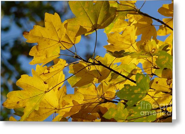 Greeting Card featuring the photograph Autumn Leaves by Jean Bernard Roussilhe