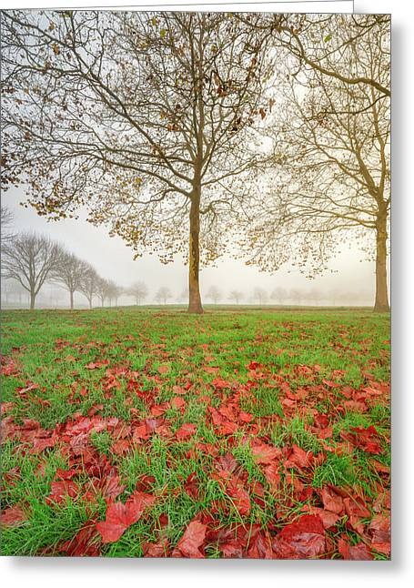 Greeting Card featuring the photograph Autumn Leaves Near To Far Super High Resolution by William Lee