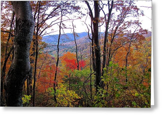 Autumn Leaves On Blue Ridge Parkway Greeting Card by Lori Miller