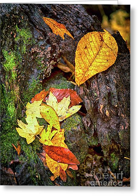 Autumn Leaves On Mossy Tree Trunk Greeting Card by Dan Carmichael