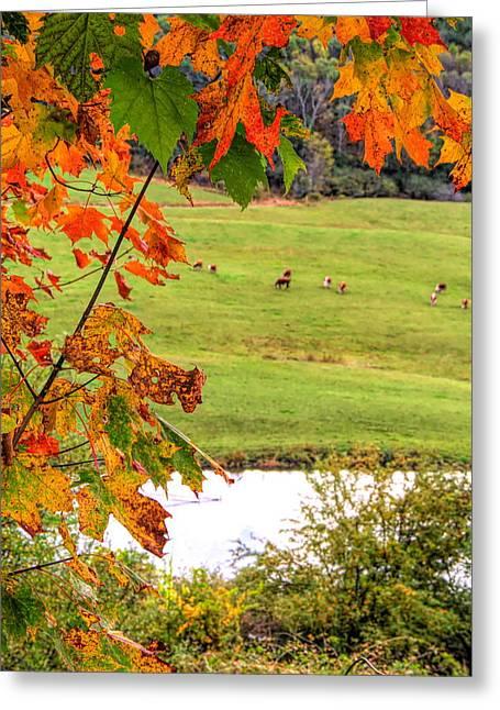 Autumn Leaves On The Farm Greeting Card
