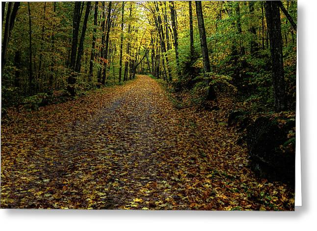 Greeting Card featuring the photograph Autumn Leaves On The Trail by David Patterson