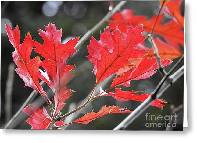 Greeting Card featuring the photograph Autumn Leaves by Peggy Hughes