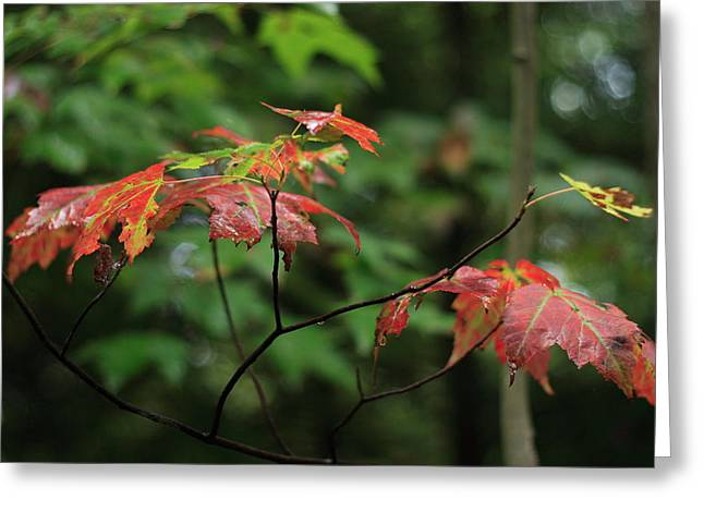 Greeting Card featuring the photograph Autumn Leaves by Randy Bayne